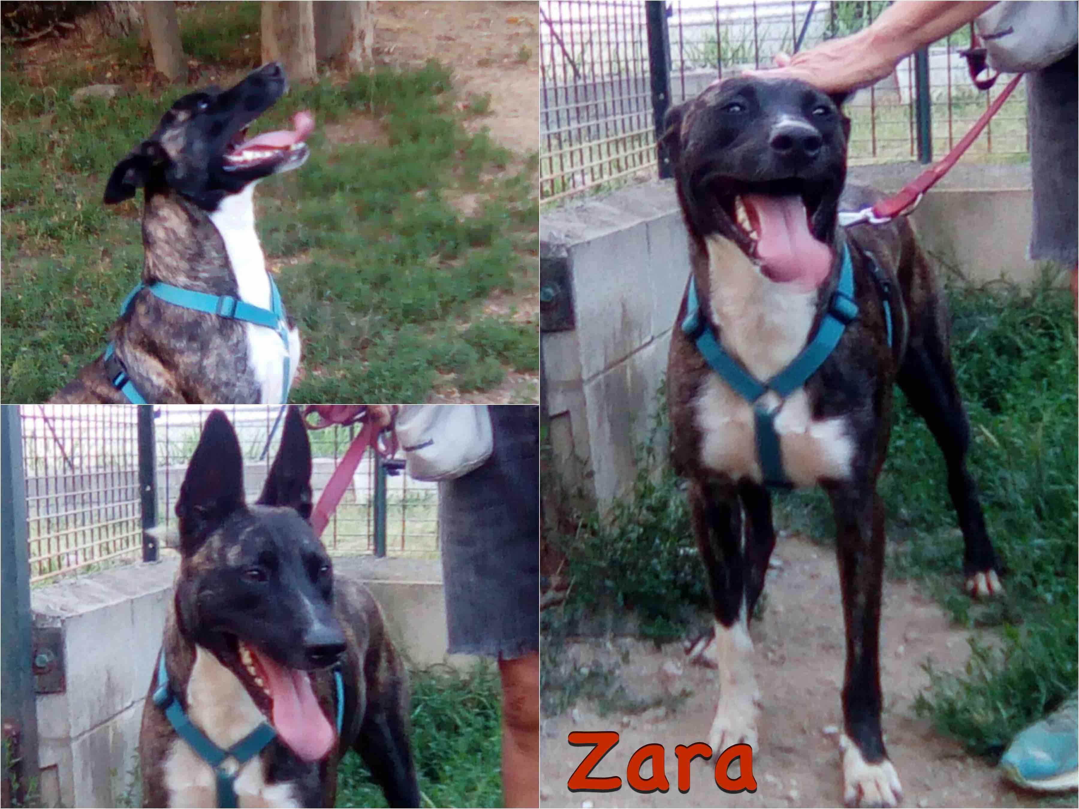 Zara_new