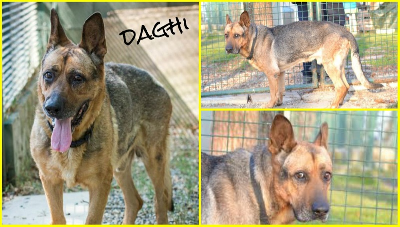 daghi collage