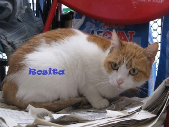 rosita1