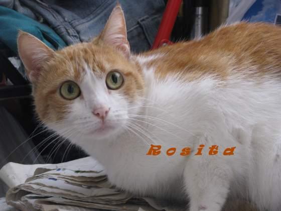 rosita2