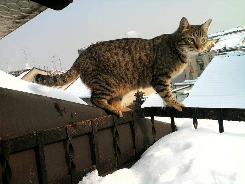 gatto_adozione