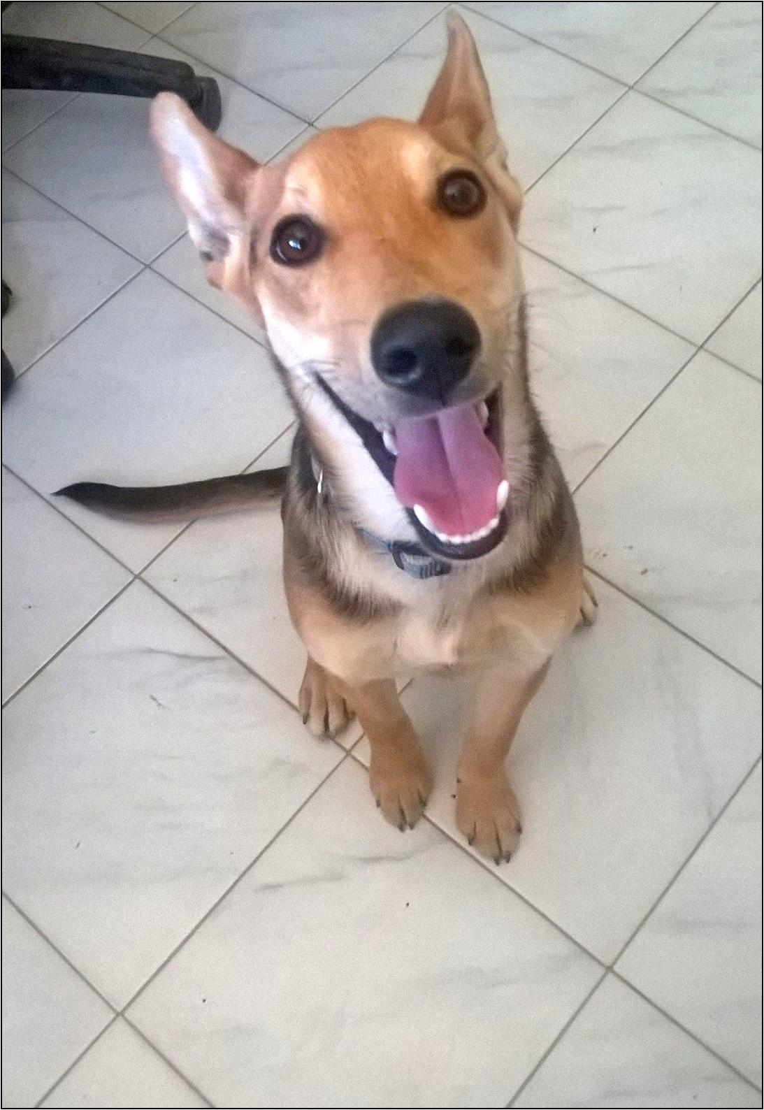 paco adottato
