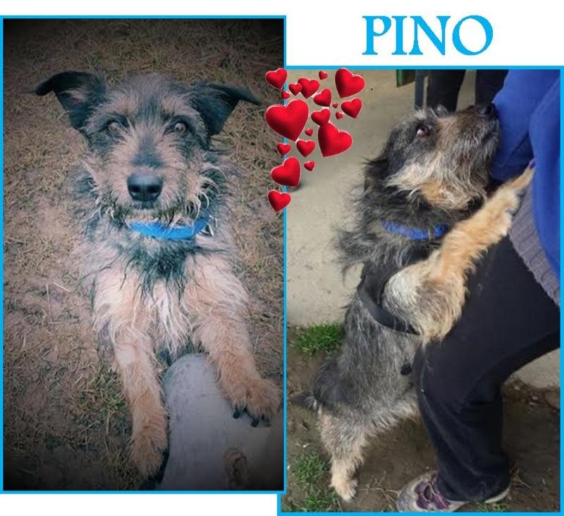 PINO 1