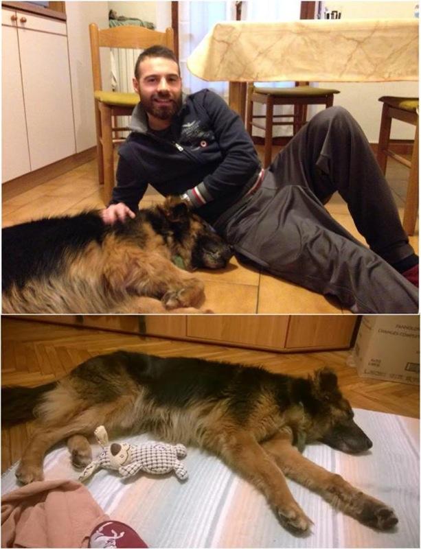 Rex_adottato