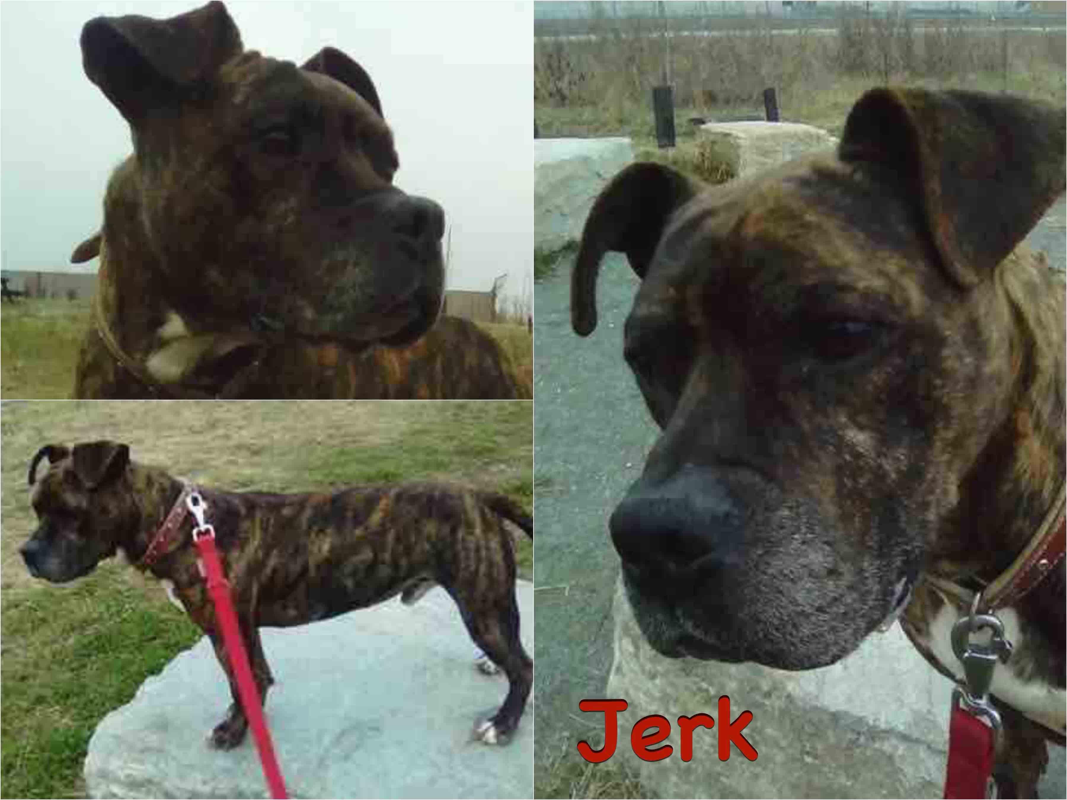 Jerk_new