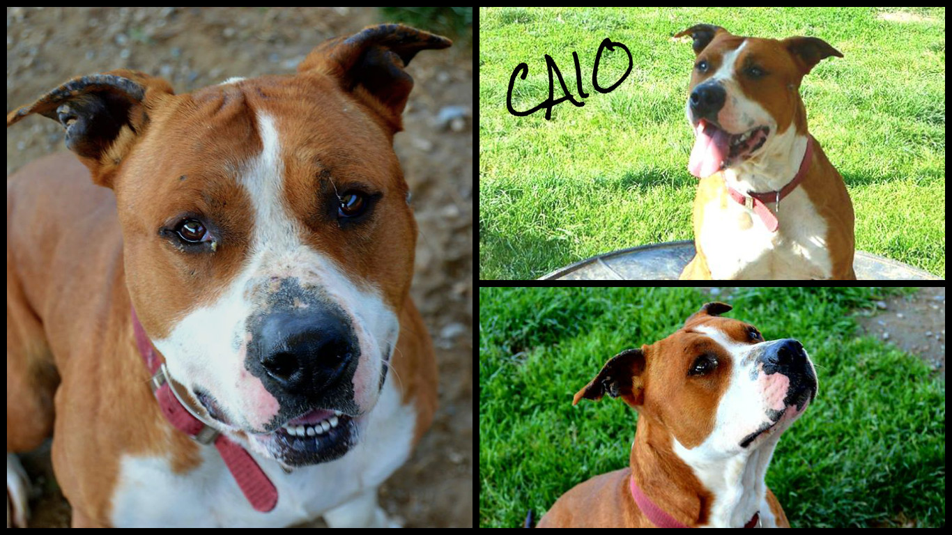 CAIO COLLAGE