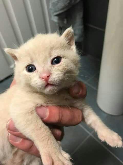 gattino_tre_mesi