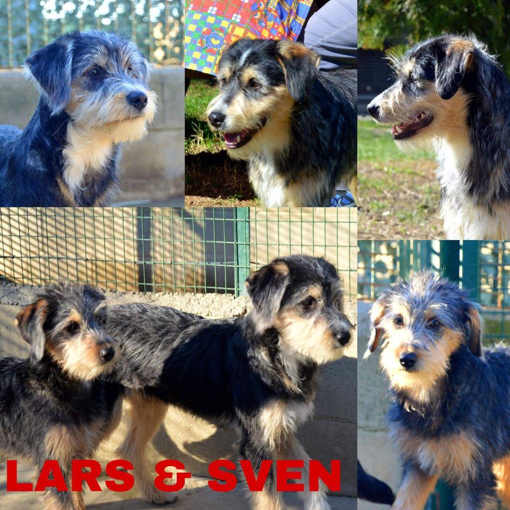 Lars e Sven