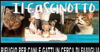 Raccolta fondi per il gattile del Cascinotto!