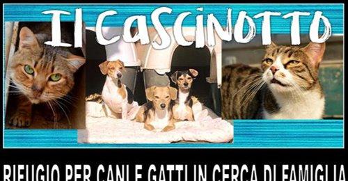 cascinotto_collegno