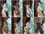 Otto gattini da adottare!