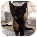 Anthea adottata!