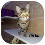 Birba adottata!
