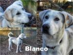 Blanco adottato!