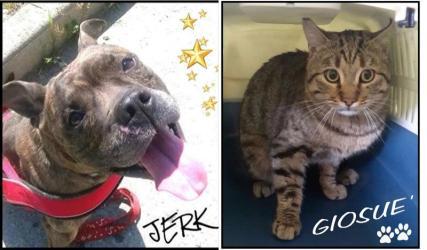 I volti del mese: Jerk e Giosuè - marzo 2016