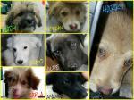 7 magnifici cuccioli in cerca di casa!