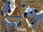 Cindy adottata!