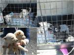 7 cuccioli in cerca di casa