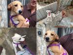 Due cuccioli in cerca di una nuova vita