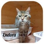 Endora adottata!