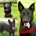 Fango adottato!