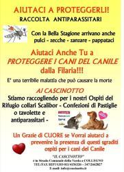 Leishmaniosi e Filariosi: un grave rischio per i cani!