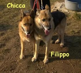 Filippo e Chicca: ultimo arrivo!