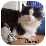 Hawaii adottata!