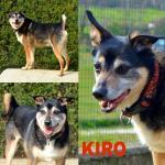 Kiro adottato!