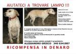 Aiutateci a trovare Lampo!