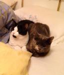 Lilu e Cocco a casa!