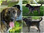 Marlon adottato!