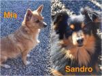 Mia e Sandro adottati!