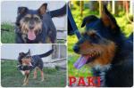 Adozione del cuore: Paki