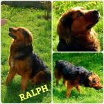 Adozione del cuore: Ralph