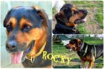 Rocky rott adottato!