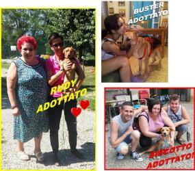 Rudy, Buster e Biscotto adottati!