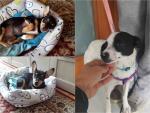 Tre cucciole in cerca di casa!
