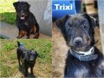 Trixi adottata!