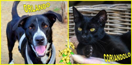 I volti del mese: Orlando e Coriandolo - settembre 2016 - adottati!