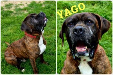 Ciao Yago