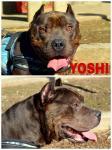 Adozione del cuore: Yoshi