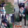 I Volti del mese: Zara!