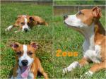 Zeus adottato!