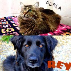 I volti del mese: Perla (adottata) e Rey - aprile 2016