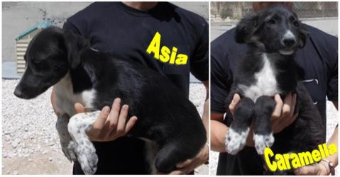 Asia e Caramella