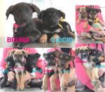 Undici cuccioli in cerca di casa!
