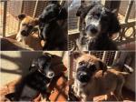 8 cuccioli: tutti adottati!