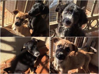 8 cuccioli e una mamma in cerca di casa: presto in arrivo al Cascinotto!