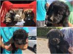 Cuccioli in cerca di casa: urgente!
